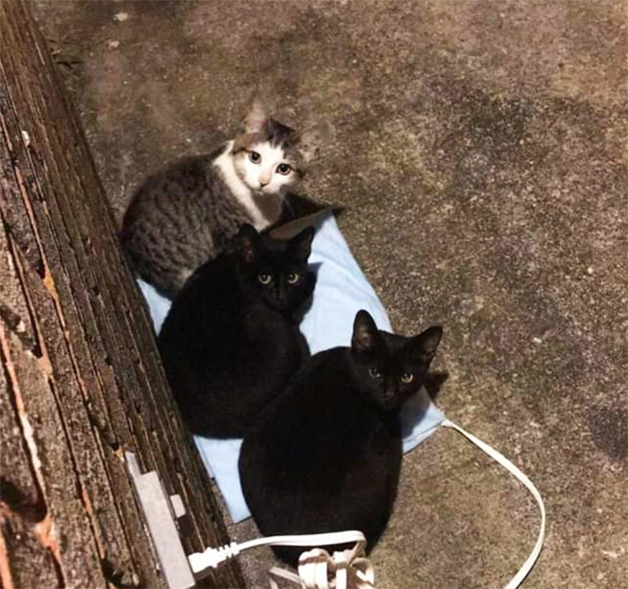 heating pad for stray cats