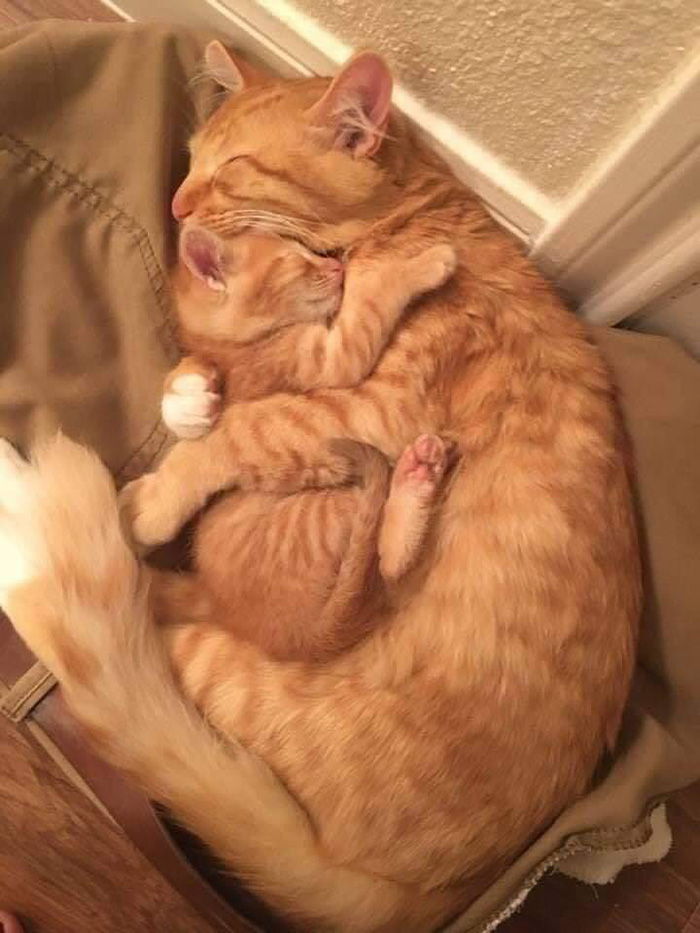 cat and kitten a mothers love