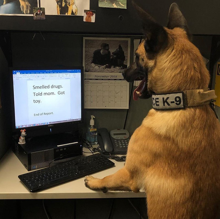 diary of police dog