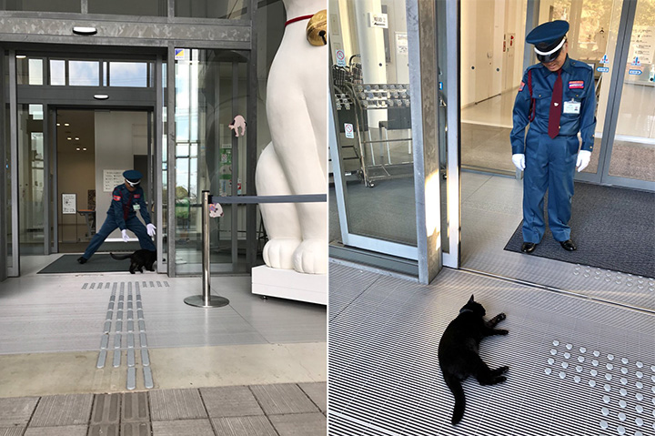 2 cats try to sneak into museum