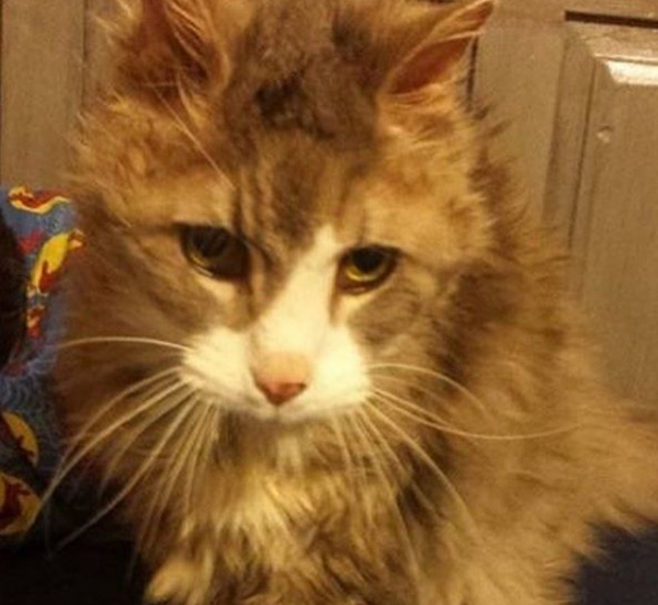 letter to animal shelter hospice cat