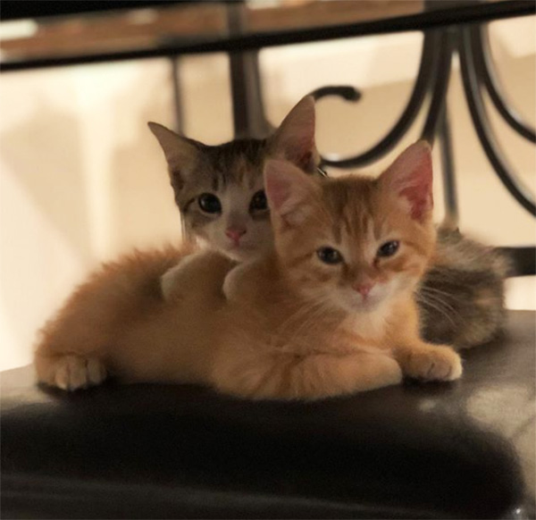 debit and credit office kittens