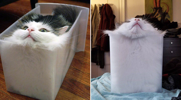 Physicist Wins Ig Noble Prize For Study On Whether Cats Should Be Classified As Liquids Or Solids