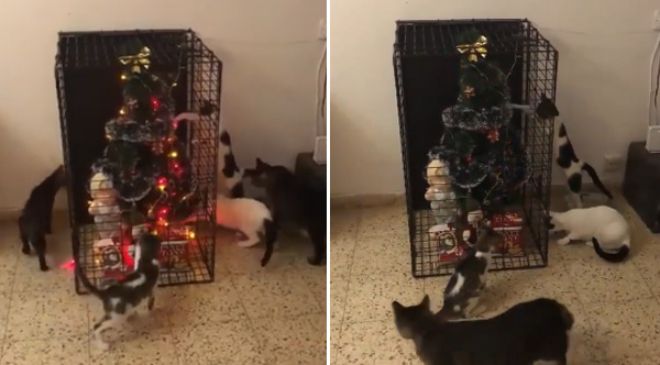 How To Keep Your Christmas Tree Safe From Your Cats