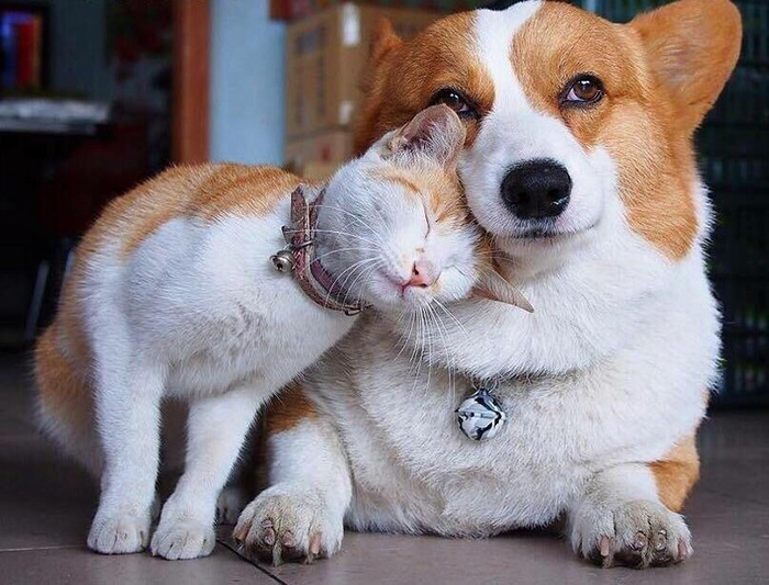dog and cat best friends same colors