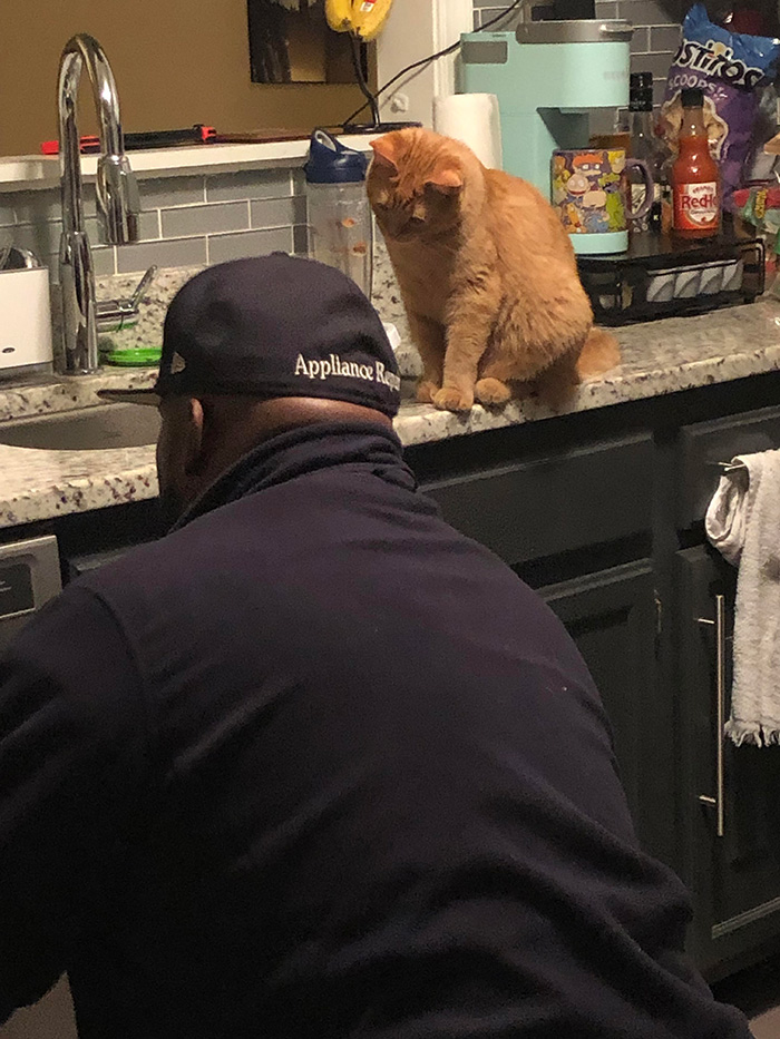 cat supervisor