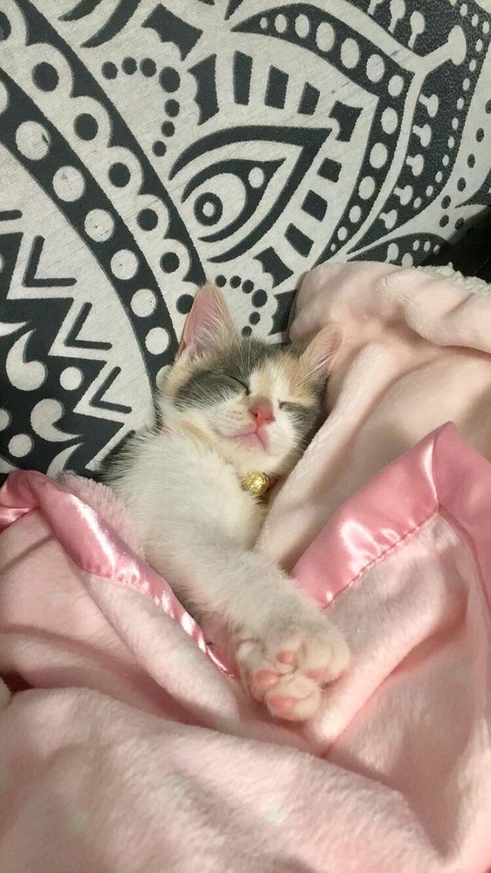 therapy kitten nursing home