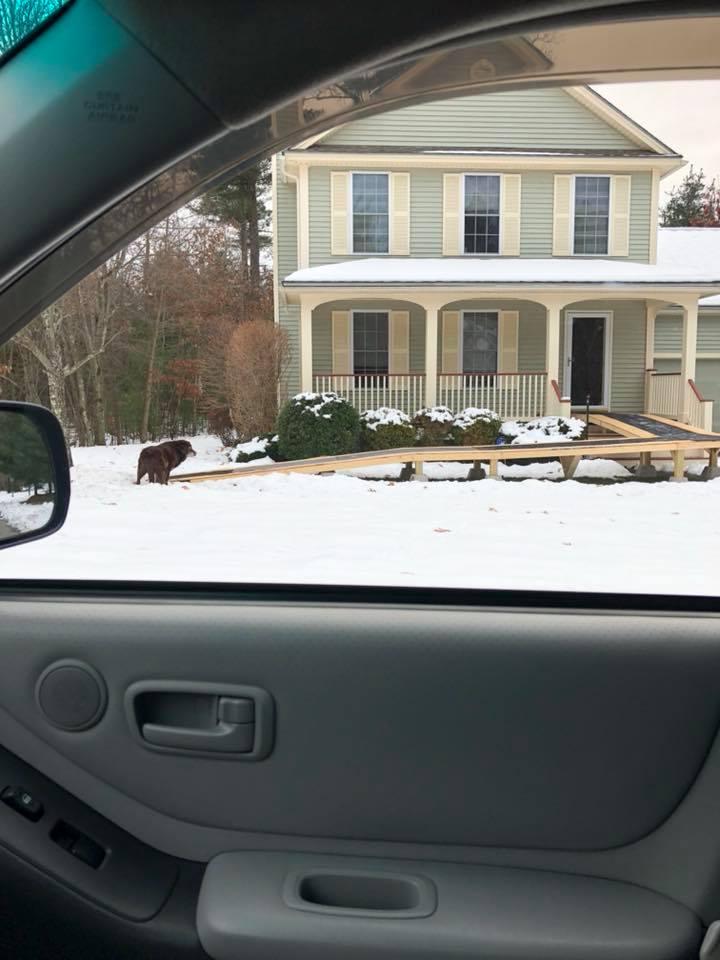 hershey dog ramp in snow