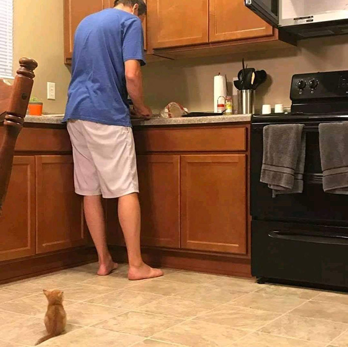 kitten waits for food