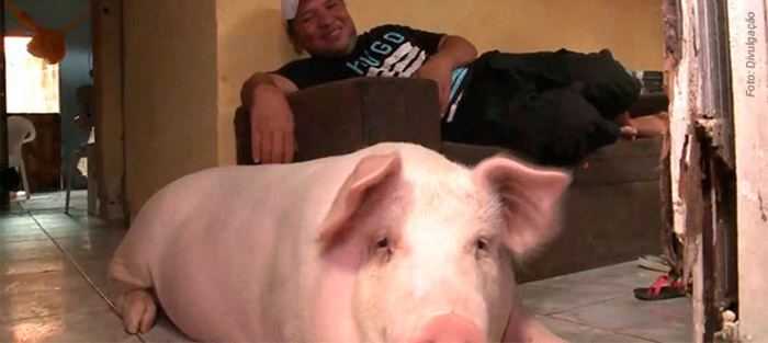 family adopts pig they planned to eat for Christmas