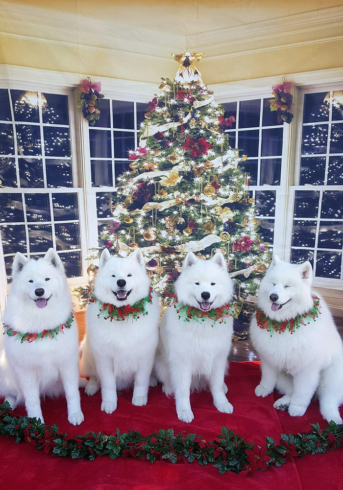 dogs ready for christmas