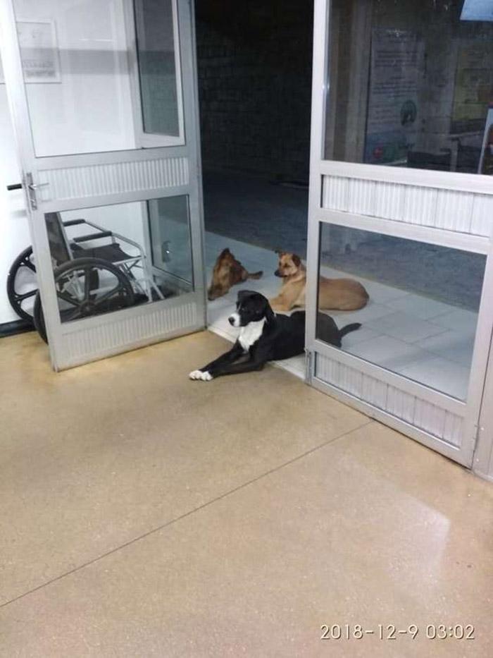 dogs wait for homeless man in hospital