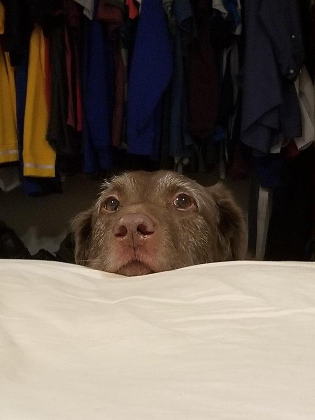 dog asks permission for bed