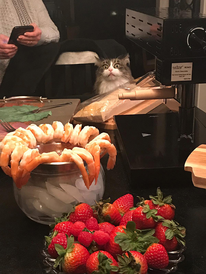 cat shrimp