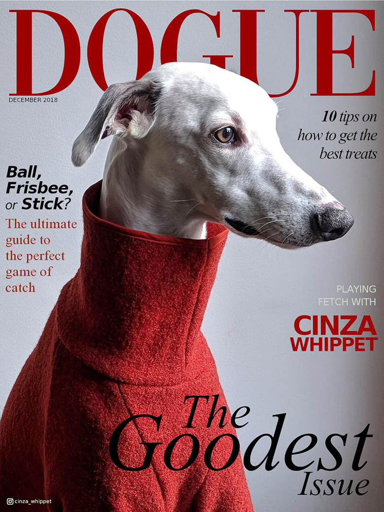 dogue whippet cover