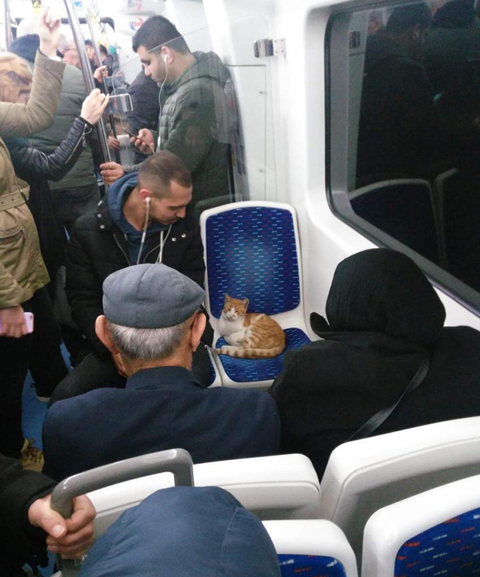 cat on train