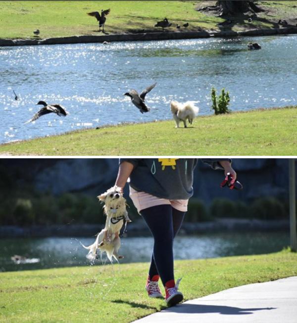 dog no regrets