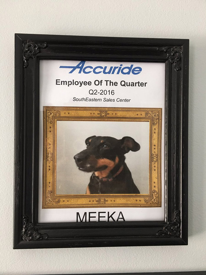 man works from home makes dog employee of the quarter