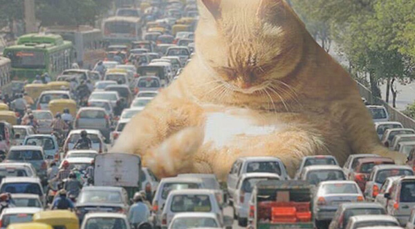 Here S What Life Would Be Like If Giant Cats Existed