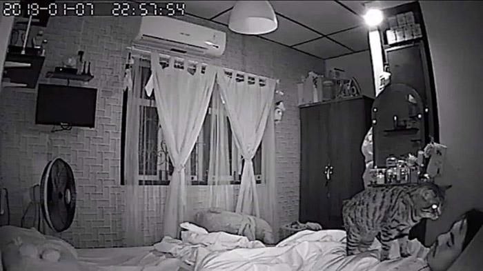 cat sleep paralysis