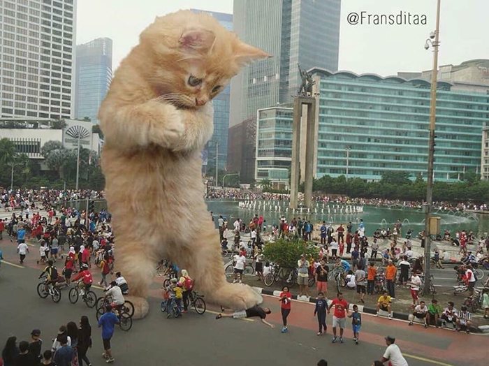 giant cats funny