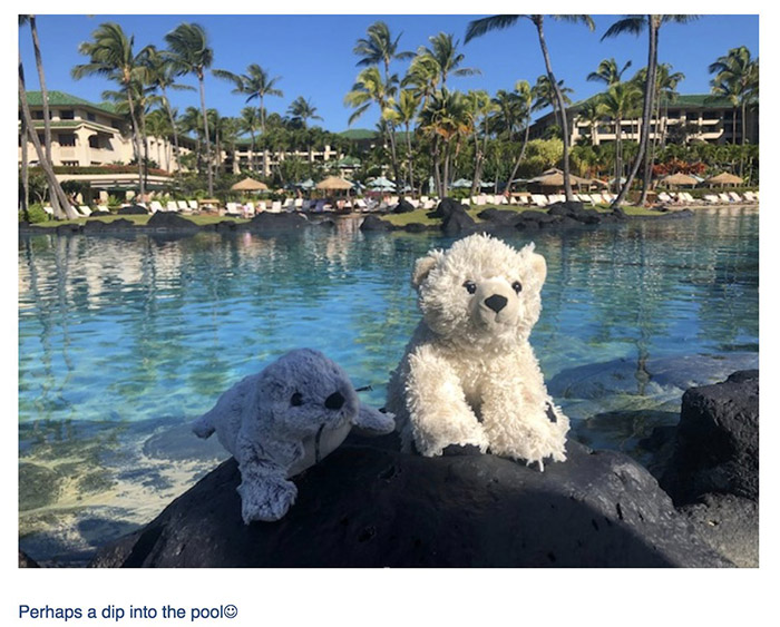 lost teddy bear hotel takes pictures with it hawaii