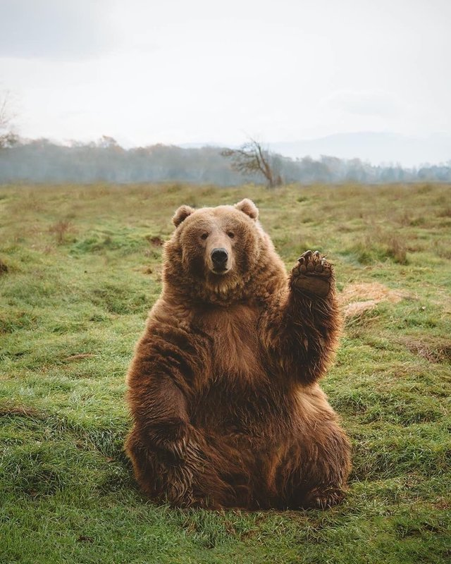 bear waves hi