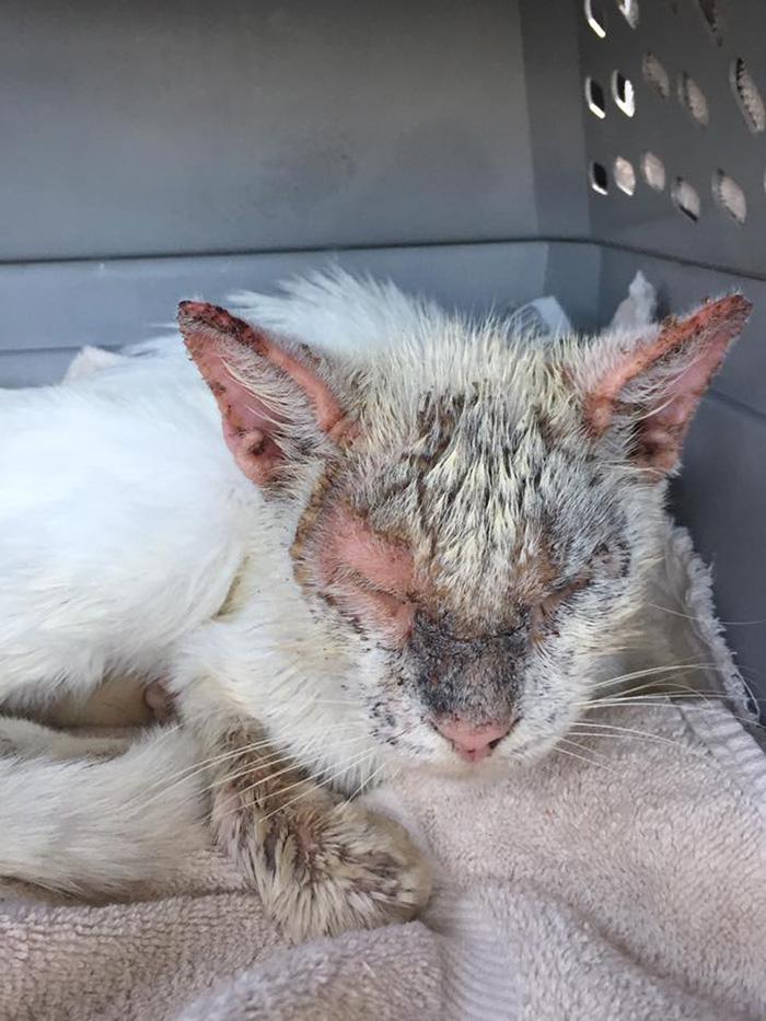 woman rescues cat beautiful eyes
