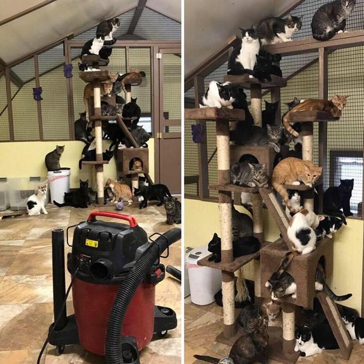 vacuuming at animal shelter cats