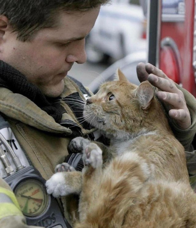 cat looks at fireman who saved him