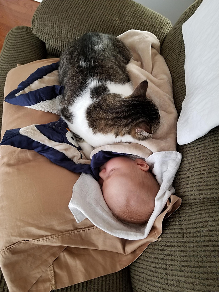 cat helps baby stop crying