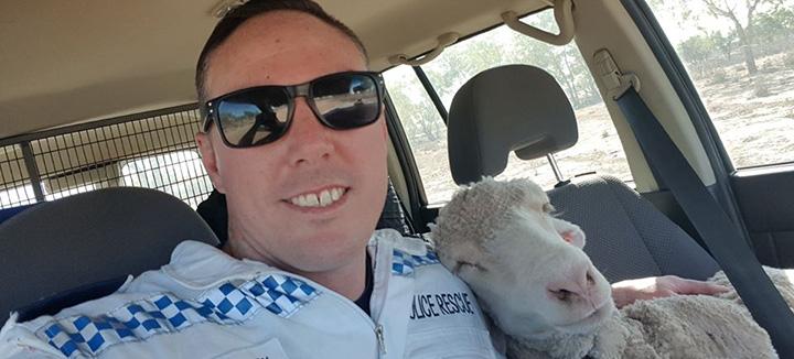 cop helps sheep