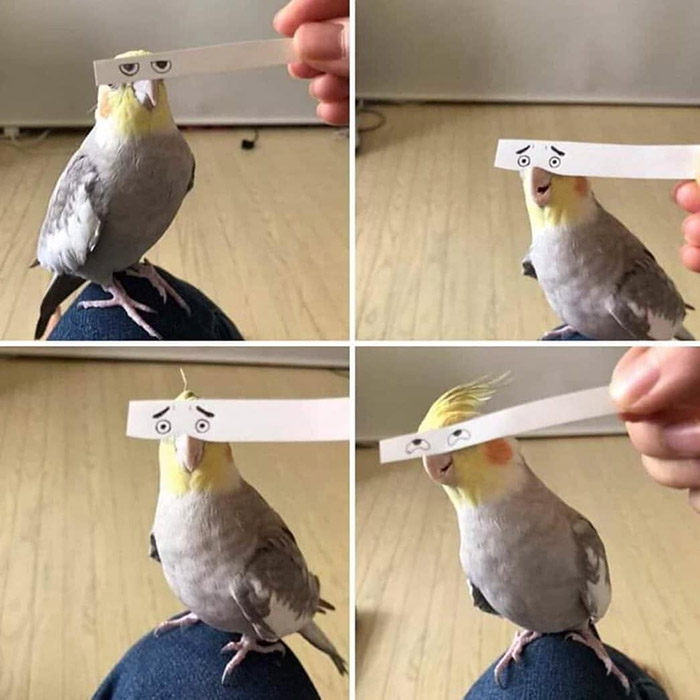 the many expressions of birds