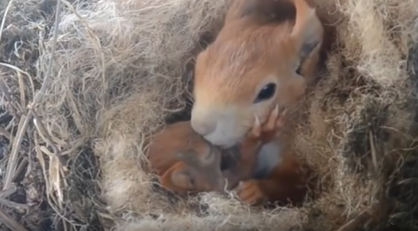 Miraculous Squirrel Makes Home For Her Baby Right Outside Mans Beutiful Home Inspiration Ommitmahrainfo