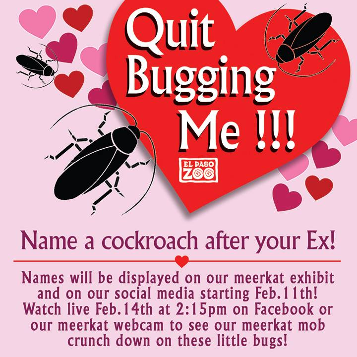 cockroach after ex valentines day