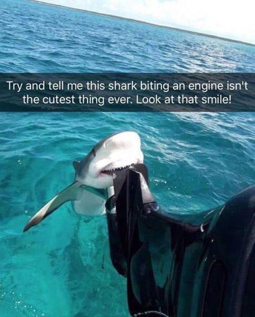 shark bites motor on boat