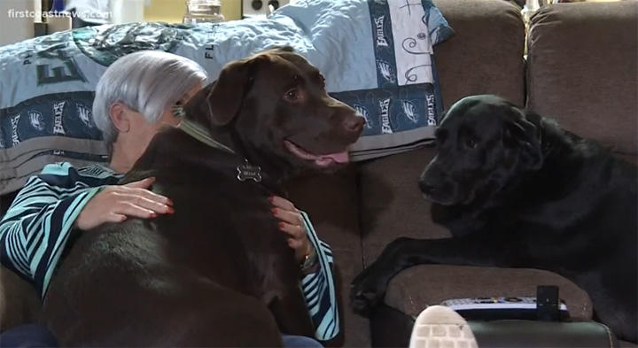 dogs save owner who had stroke