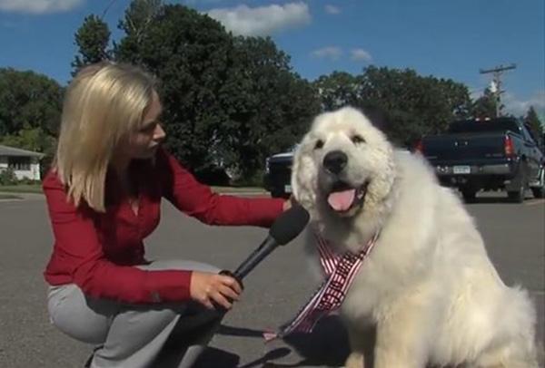 duke the dog mayor dies