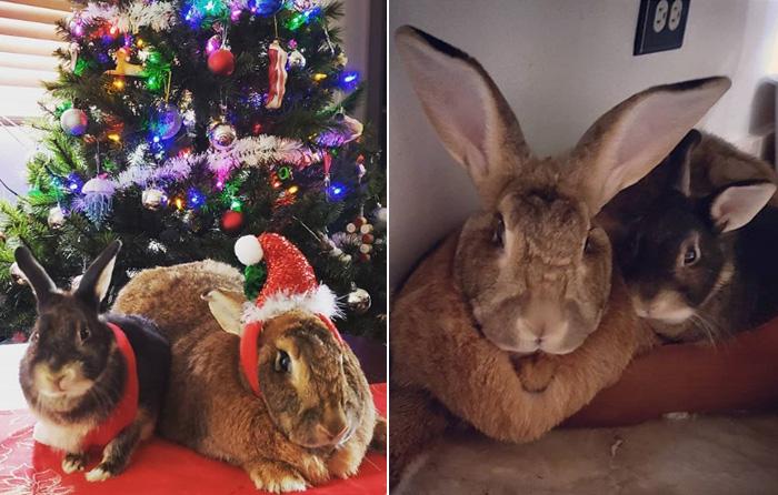 lilly romeo rabbit couple