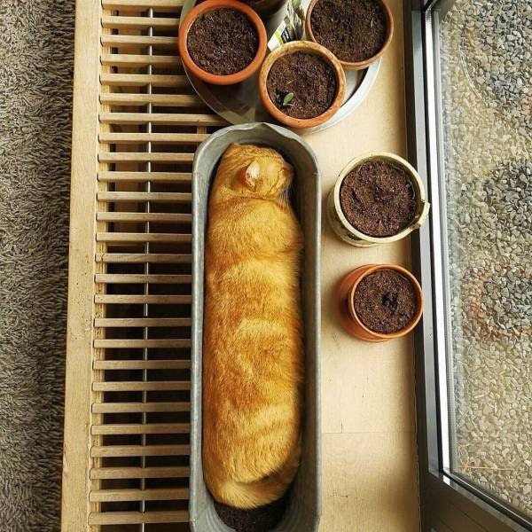 cat loaf of bread