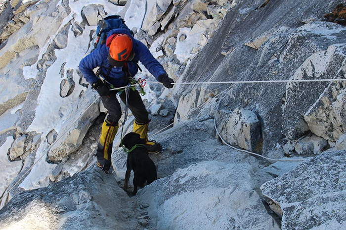 stray dog climbs Himalayan summit