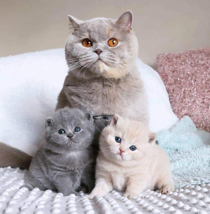 fluffy cat family