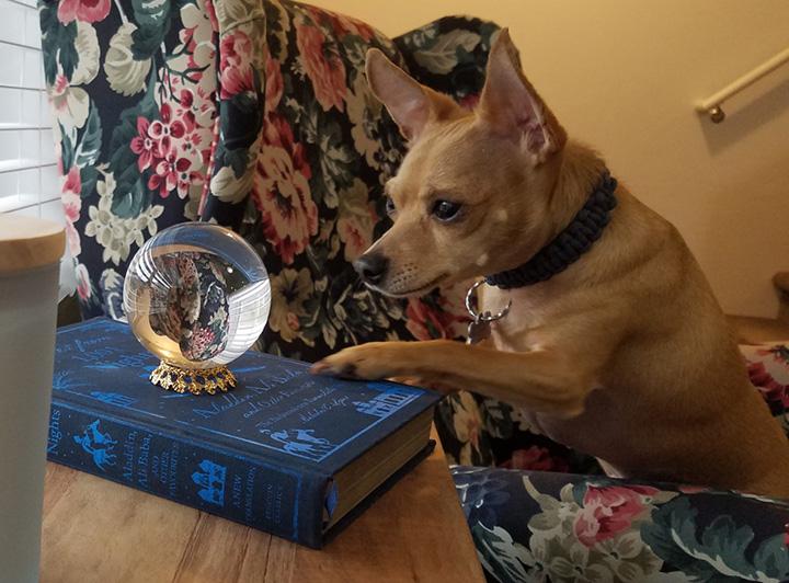 dog crystal ball