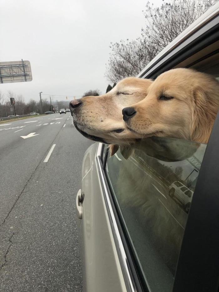 charlie maverick blind dog guide