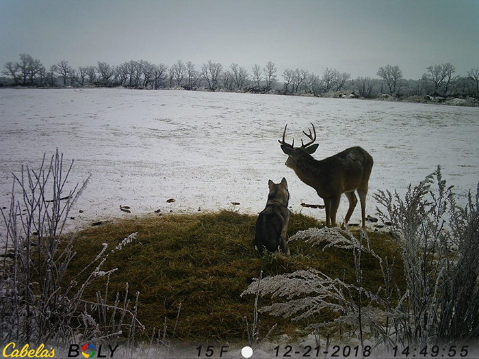 dog wanders away from home to hang out with deer