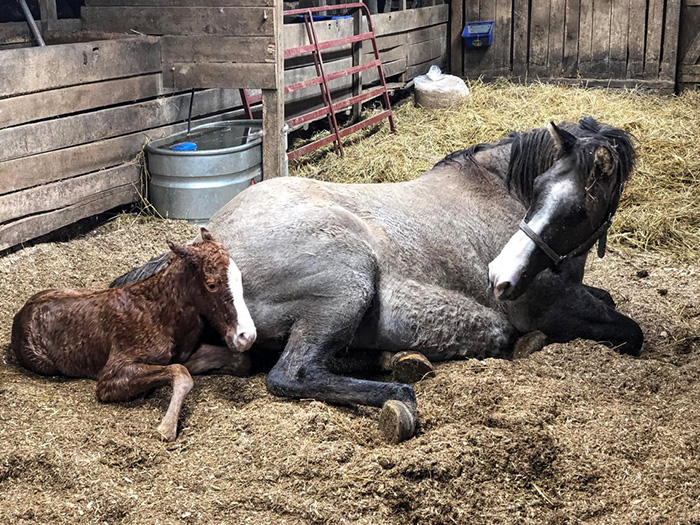proud momma and baby horse