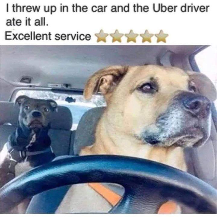 uber dog funny