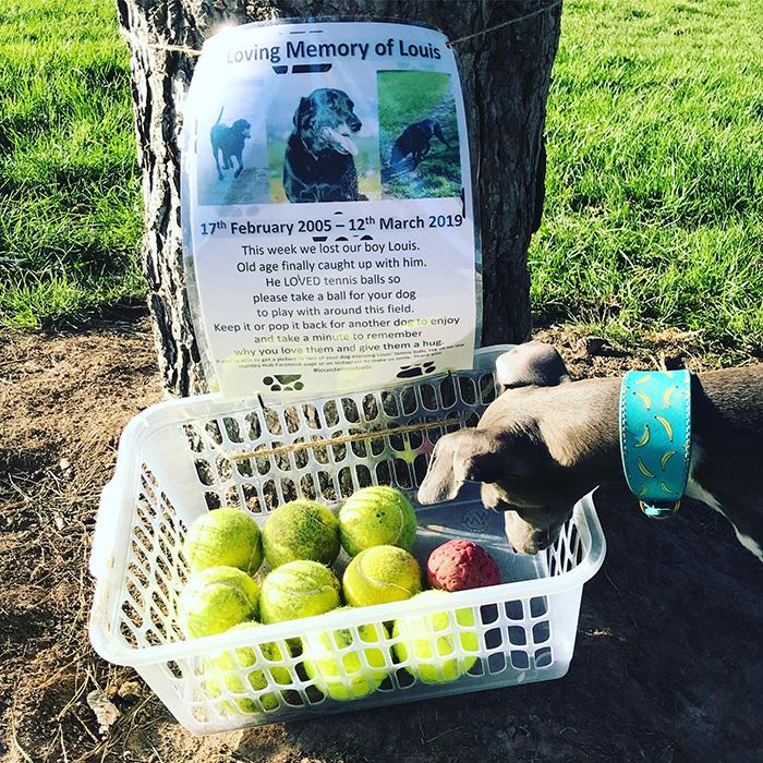 louis tennis balls at park