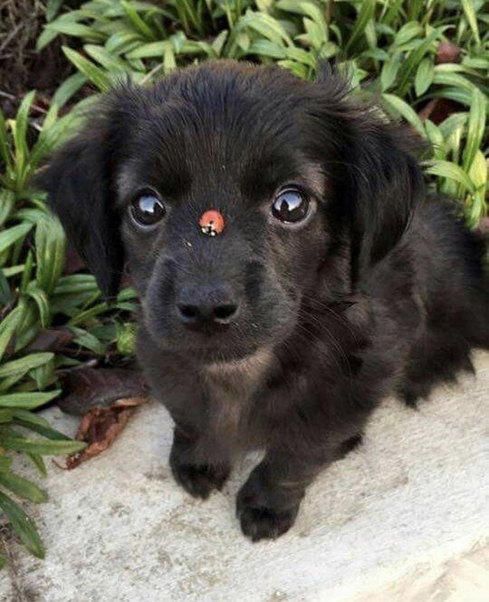 lady bug on puppy