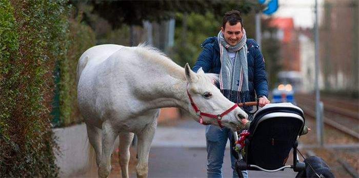 jenny horse frankfurt walks alone